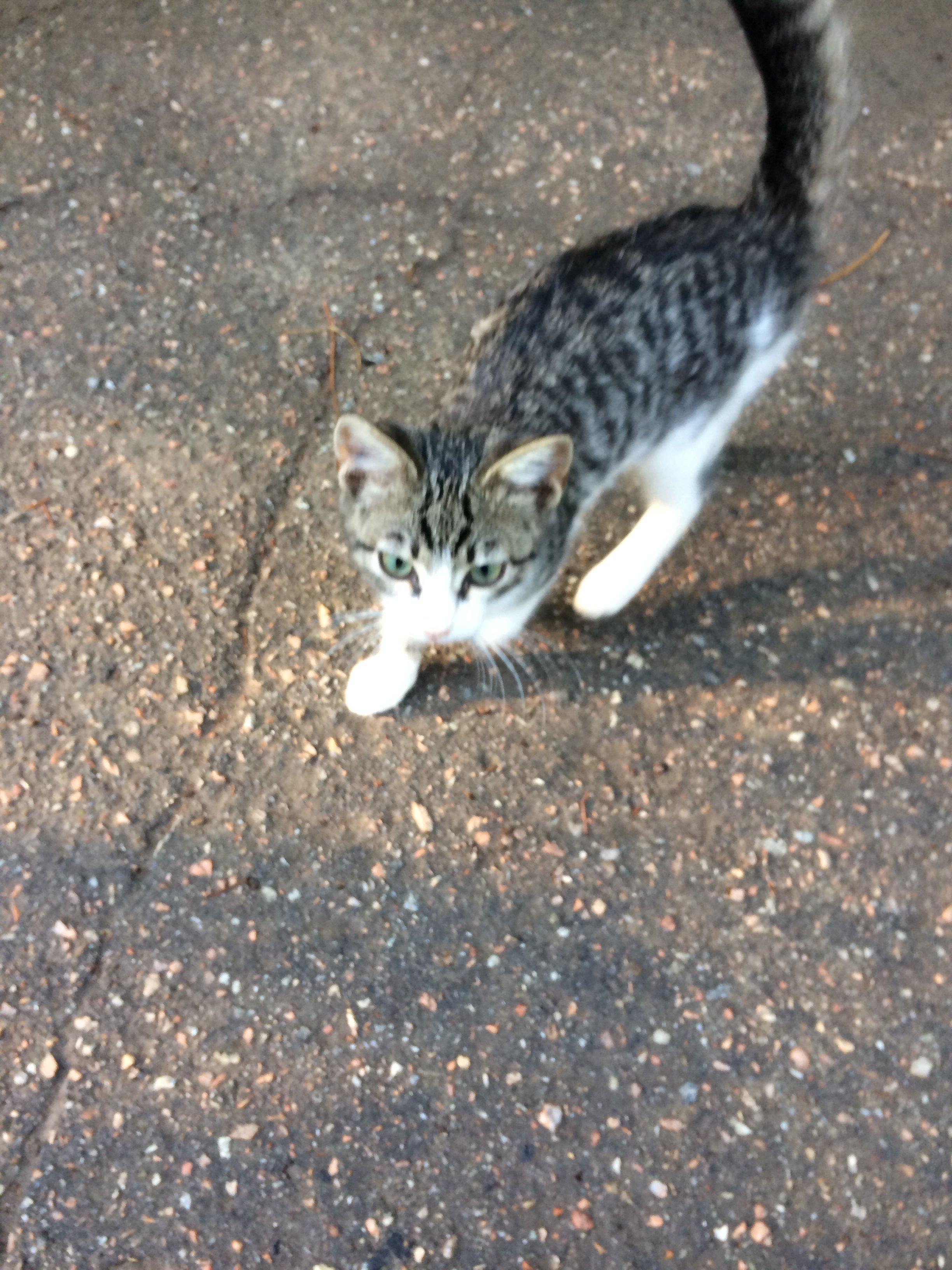 Котики с улицы