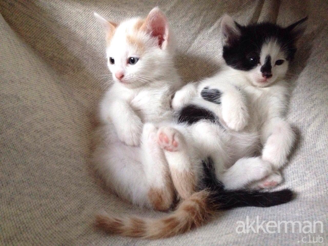 Котята в Добрый дом!